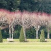 Avenue of trees, Oldway mansion, Paignton