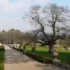 Fine oak, Oldway mansion, Paignton