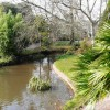 Ornamental pond and ducks, Oldway mansion, Paignton