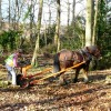 Valley Park - Logging the Old Fashion Way