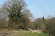 Bish Wood