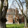 Trees, Oldway mansion, Paignton