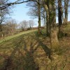 Open woodland near Priestacott