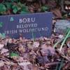 Bedd Ci Portmeirion A Dog's Grave