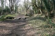 Broadoak Wood, Connah's Quay