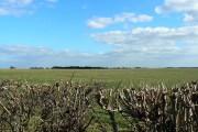 Farmland near Harnhill