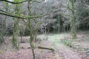 Bowdanoddon Wood/Hawk's Wood