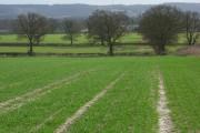 Farmland, Stoke Talmage