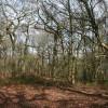 Woodland in winter, Stanner Nab