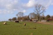 Pastoral scene, South Weston