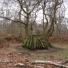 Sherwood Forest - Unusual Tree  Stump