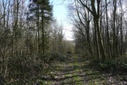Track in Maltby Wood