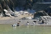Larkstone beach & local dogs
