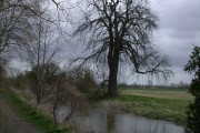 Rhee and Tree
