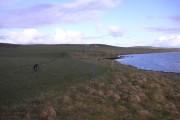 Farmland on the shore of Stenness Loch