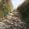 Cat on a track, Hendra