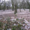 Hearsall Common, Easter 2008