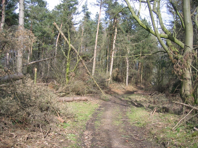 Woodland track at Gwysaney