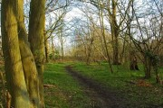 Warwick Wood