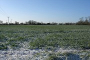 An oil seed rape crop in snow