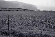 Farmland near Lee, Devon, taken 1960