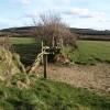 Gate and field boundary near Windabout Cross