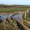 Puddles in field above Nethercott