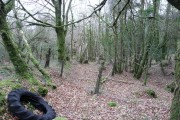 Bowdanoddon Wood