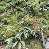 Ferns, mosses and ivy