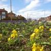 Spring in Darfield Ring