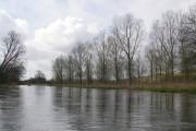 Riverside trees