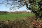 Wheat field in late March sunshine