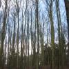 Woodland beside Tuttington Road