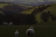 A sheep's view from Trentishoe Down