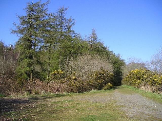 Open Access Woodland