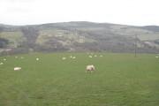 Sheep pasture, Nemphlar