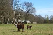 Pasture, barn and woodland. Park Corner