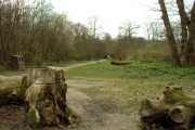 Part of Norsey Wood