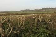 View over a trimmed farm hedge on to cultivated land
