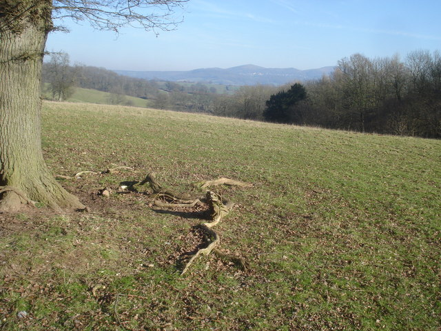 Farmland north of Beacon Hill Wood