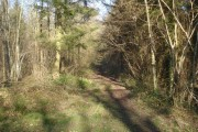 Footpath in Beacon Hill Wood