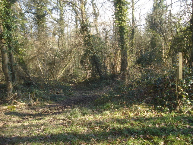 Path junction in Beacon Hill Wood