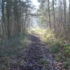 Track through Beacon Hill Wood