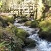 Footbridge over the stream in the woods below Comfort