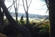 Peaton Through The Trees