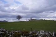 Sheep Grazing on craggy ground