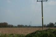 Poles across the farmland