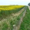 Footpath to Sallywood Farm, near Horsley