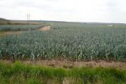 Farmland near Budby
