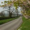 Lane and blossom
